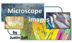 The art of nature captured through the microscope images by Justin Zoll m
