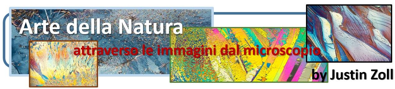 Arte della natura attraverso le immagini da microscopio elettronico